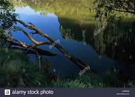 water reflection, Windjana Gorge NP, Kimberley, West Australia Stock Photo  - Alamy