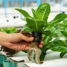 indoor gardening hydroponics 101