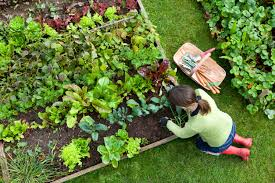 how to plan your vegetable garden osc