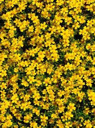20 perennials for full sun