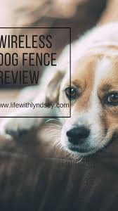 My Review On The Petsafe Wireless Fence Pet Containment System Pet Containment Systems Pet Safe Dog Fence