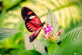 صور فراشة ملونة روعة