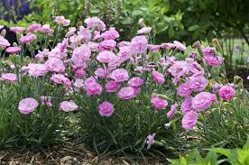 10 most fragrant outdoor flowers best