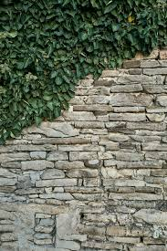 ivy, stone wall, france, gray, brick wall, covered, green, plant, CC0,  public domain, royalty free | Piqsels