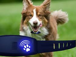 High Tech Pet New Dog Training Collar Has Gps Tracking Invisible Fence