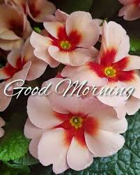good morning image 2018 hd