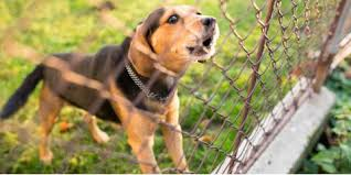 How Fences Can Keep Big Dogs On Your Property Wood Link Fence Co Columbia Nearsay