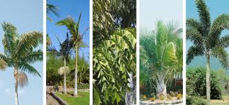 a palm for every home flower power