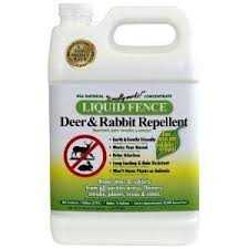 Homemade Liquid Fence Keep Deer And Rabbits Out Of The Garden Rabbit Repellent Deer Repellant Repellent