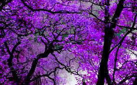 best 50 violet backgrounds for desktop