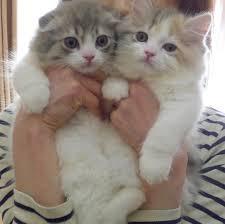 صور كيوت قطط 9 عالم القطط Miaw Miaw
