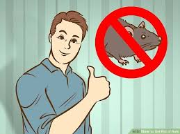 how to get rid of rats naturally 14