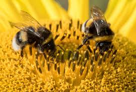 Image result for bees photos