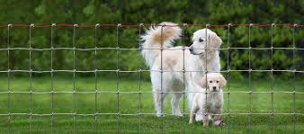 Yard Garden Kennel Fence Multi Purpose Wire Fencing