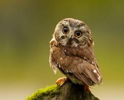 cute owl wallpaper 1280x1024 45987