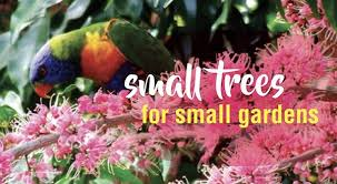 small trees in small gardens about