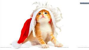 lovely cat wearing santa cap wallpaper