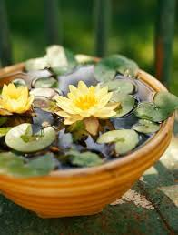 easy diy container water gardens the