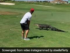 Florida Alligator Latest News Photos Videos On Florida Alligator Ndtv Com