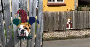 Bulldog Loves Watching Street Through Hole In Fence So Owners Paint His Very Own Costume