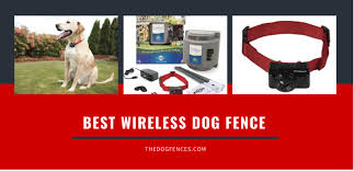 Best Wireless Underground Electric Invisible Dog Fence With Images Dog Fence Wireless Dog Fence Dogs