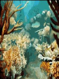 moving tropical fish wallpaper