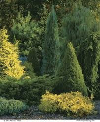 composing with conifers finegardening