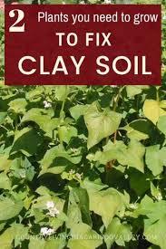 clay soil garden soil
