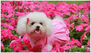 cute dog baby wallpapers on