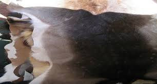 the 7 steps to tanning a deer hide