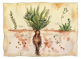 """Mandragora, la pianta """"magica"""": proprietà, usi ed effetti ..."""