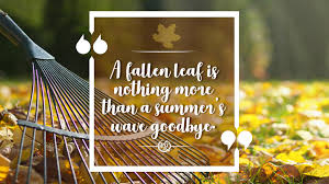 a fallen leaf is nothing more than a summer s wave goodbye