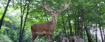 Deer Fence Canada Home