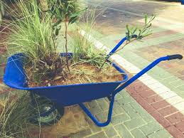 Variety Of Flowers And Plants Kept In Blue Wheelbarrow Near The Fence On The Street Stock Photo Image Of Display Cart 116927866