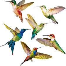 Amazon Com 6 Pieces Large Size Hummingbird Window Clings Anti Collision Window Clings Decals To Prevent Bird Strikes On Window Glass Non Adhesive Vinyl Cling Hummingbird Stickers Home Kitchen
