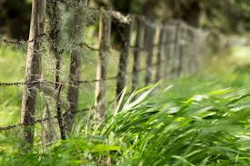 All About Fencing Uf Ifas Extension Duval County