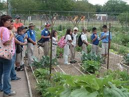 vegetable garden program a growing