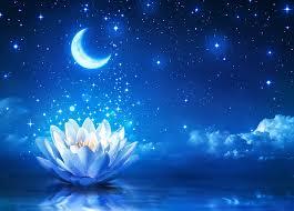 hd wallpaper white lotus flower moon