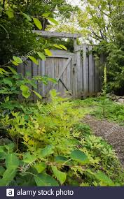 Border With Various Perennial Plants Trees And Shrubs Next To Gravel Path Leading To Grey Wooden Fence Gate In Backyard Garden In Summer Stock Photo Alamy