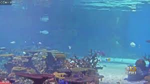 national aquarium to livestream