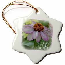 drose live life pink zinnia flower inspirational quotes flowers