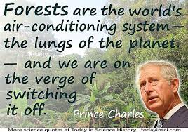 rain forest quotes quotes on rain forest science quotes