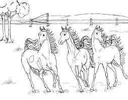 Paarden Kleurplaat Met Afbeeldingen Kleurplaten Dieren