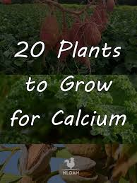 20 plants to grow for calcium amazing