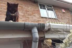 Cat Hating Neighbour Creates Fence With Barbed Wire And Three Inch Spikes To Stop Pet Walking On Wall Mirror Online