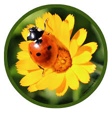 Lady Bug By Cassidy Phillips Full Color Shaped Vinyl Sticker Jimbo Phillips Webstore Online Store Powered By Storenvy
