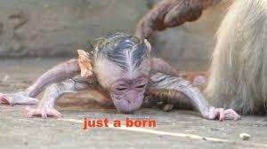 baby monkey with makeup saubhaya makeup