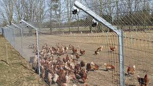 How One Egg Producer Has Used Fencing To Keep Foxes Out Farmers Weekly