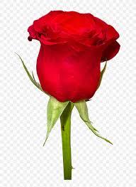 rose flower bouquet wallpaper png
