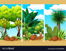 plants and rocks royalty free vector